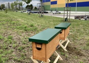 Bienen bei pfenning